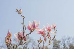 sabykoloni_magnolia_3